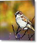Sparrow In The Park Metal Print