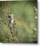 Sparrow In The Weeds Metal Print