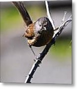 Sparrow On A Branch Metal Print