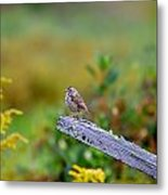 Sparrow On Board Metal Print