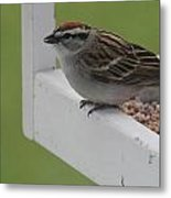 Sparrow On Feeder Metal Print