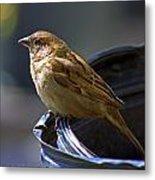 Sparrow Sentry Metal Print