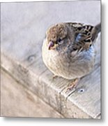 Sparrow - Takeoff Problems Metal Print