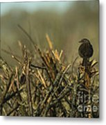 Sparrow Watch  Metal Print