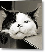 Special Delivery It's Pepper The Cat  Metal Print