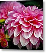 Special Occasion Metal Print