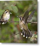Speckled Hummingbirds Metal Print