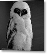 Speckled Owlet Metal Print