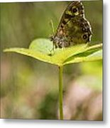 Speckled Wood Butterfly Metal Print