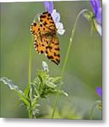 Speckled Yellow Moth On Pansy Wild Flower Metal Print