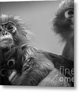 Spectacled Langur Family Metal Print