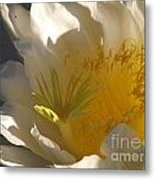 Spectacular Dragon Fruit Bloom Metal Print