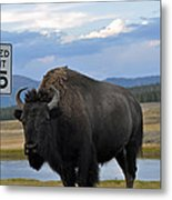 Speedy Bison In Yellowstone National Park Metal Print