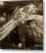 Sperm Whale Taken At Moss Landing California  On January 22 1919 Metal Print