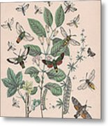 Sphingide - Thrididae - Seslidae Metal Print