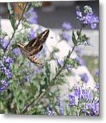 Sphinx Moth Metal Print