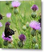 Spicebush Swallowtail Heaven Metal Print
