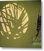 Spider And Sunlight Metal Print