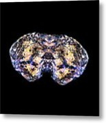 Spider Bites Butterfly Metal Print