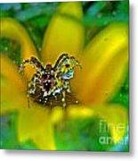Spider Dew Flower Reflect Metal Print