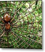 Spider In Its Web Metal Print