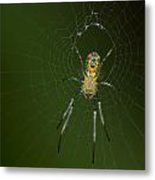 Spider In Mexico Metal Print