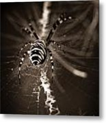 Spider In Waiting Metal Print