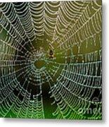 Spider In Web 3 Metal Print