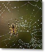 Spider In Web 5 Metal Print