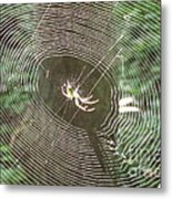 Spider Light Metal Print
