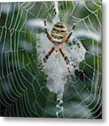 Spider On Its Web Metal Print