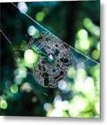 Spider Web Metal Print