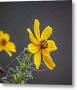 Spider Web On The Flower  Metal Print
