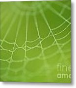 Spider Web With Dew Drops  Metal Print