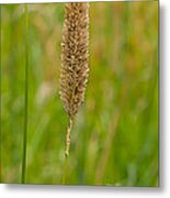 Spider's Grass Staircase Metal Print