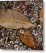 Spiderweb And Raindrops Metal Print