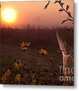 Spiderweb And Wildflowers Lit By Morning Sunrise Metal Print