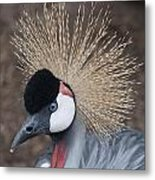 Spikey Feathers-closeup Metal Print