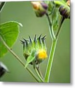 Spiky Green Wild Flowers Metal Print