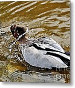 Spin Dry Duck Metal Print