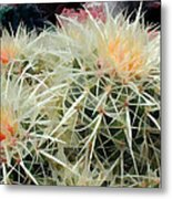 Spiny Barrel Cactus Metal Print