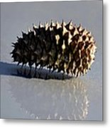 Spiny Reflections Metal Print