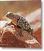 Spiny Swift Looks Over Its Domain Metal Print
