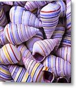 Spiral Sea Shells Metal Print