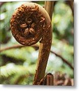 Spiral Tree Fern Metal Print