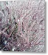 Spirea In Ice Metal Print