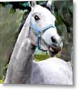 Spirited Grey Horse Metal Print