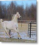 Spirited Horse Metal Print