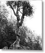 Spirt Tree Metal Print