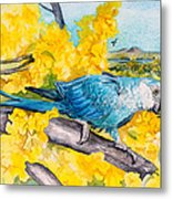 Spix's Macaw - A Dream Of Home Metal Print